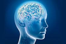 Les effets de l'açaï sur notre cerveau et notre santé mentale