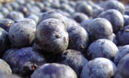 Le fruit appelé baie d'Açaï