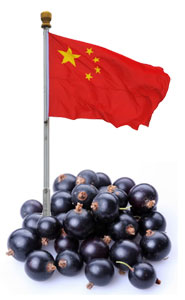 L'acai made in China - Qualité médiocre